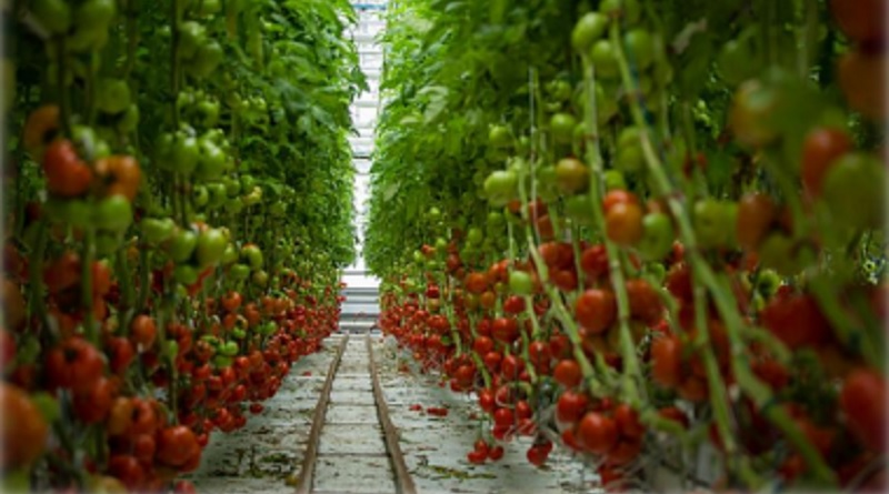 greenhouse report_embassynews.net